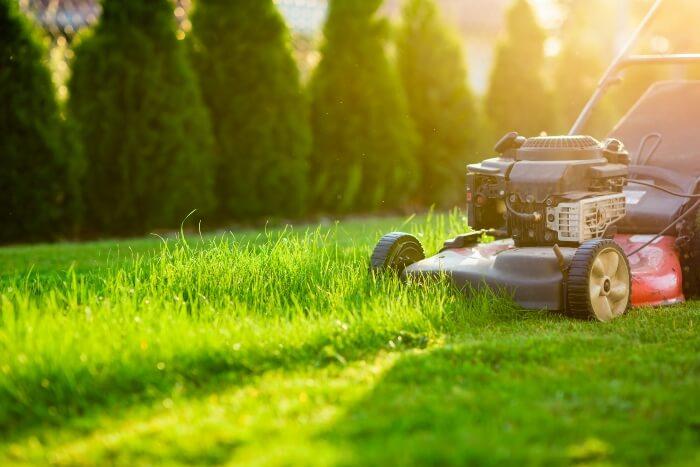 Lawn Fertilization Guide